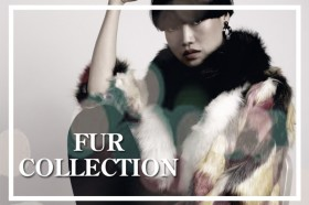 slide_furcollection